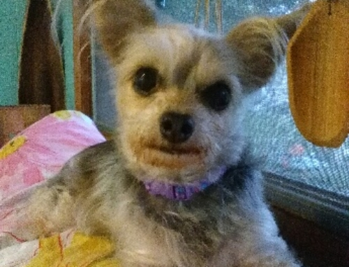 Pebbles Needs Some Dental and Blood Work