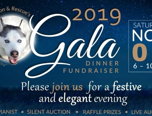 2019 Gala Dinner Fundraiser